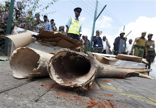 Airport personnel stand guarding the elephant tusks and containers at Kenyatta International airport, Nairobi, Kenya, Friday, May 6, 2011. Joseph Ngisa, the officer in charge of criminal investigations in the country&#39;s airports, said they impounded 84 elephant tusks concealed in metal containers on Thursday. Ngisa says sniffer dogs led the policemen to the containers at the Jomo Kenyatta International Airport&#39;s cargo hold. &#40;AP Photo&#47;Sayyid Azim&#41; <span class=meta>(AP Photo&#47; Sayyid Azim)</span>