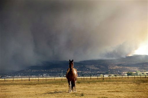 A horse stands in the middle of a field as the Wallow fire approaches in Springerville, Ariz., Tuesday, June 7, 2011.  The blaze has burned 486 square miles of ponderosa pine forest, driven by wind gusts of more than 60 mph since it was sparked on May 29 by what authorities believe was an unattended campfire. It officially became the second-largest in Arizona history on Tuesday. &#40;AP Photo&#47;Marcio Jose Sanchez&#41; <span class=meta>(AP Photo&#47; Marcio Jose Sanchez)</span>