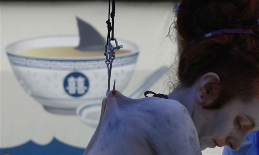 British artist Alice Newstead gets herself hung by shark hooks during her demonstration to protest against shark slaughter in Hong Kong Tuesday, June 14, 2011. The protest was organized by marine conservation group Shark Savers, supported by Lush Fresh Handmade Cosmetics, who are launching a global campaign to protect the sharks. &#40;AP Photo&#47;Kin Cheung&#41; <span class=meta>(AP Photo&#47; Kin Cheung)</span>