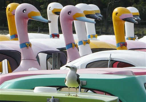 A seagull rests by a flock of swan pedal boats at the Shinobazu Pond in Tokyo&#39;s Ueno Park Monday, July 4, 2011. &#40;AP Photo&#47;Shizuo Kambayashi&#41; <span class=meta>(AP Photo&#47; Shizuo Kambayashi)</span>