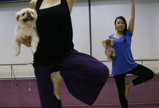 A yoga instructor, Suzette Ackermann, left, and her student Christine Yau do Dog Yoga or &#34;Doga&#34; exercises at a studio in Hong Kong, Thursday, July 14, 2011. Doga is a new field of yoga for dogs and their owners. &#40;AP Photo&#47;Kin Cheung&#41; <span class=meta>(AP Photo&#47; Kin Cheung)</span>