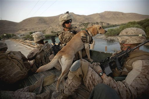 U.S. Marine Cpl. Abraham Willis, 22, of Beech Bottom, W. Va., with the 2nd Battalion 12th Marines based in Kaneohe Bay, Hawaii, and his IED detection dog Preacher ride in the back of a wagon as they are shuttled over a bridge for a foot patrol at sunrise in Kajaki, Helmand province, Afghanistan, Friday, July 29, 2011. &#40;AP Photo&#47;David Goldman&#41; <span class=meta>(AP Photo&#47; David Goldman)</span>
