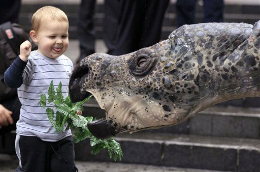 Winny Saur, the Australian Museum&#39;s robotic Muttaburrasaurus, makes friends with 2 1&#47;2-year-old Matthew Kealy in Sydney, Friday, Aug. 12, 2011, during the launch of National Science Week. Muttaburrasaurus was a large, plant-eating ornithopod dinosaur from the Early Cretaceous of eastern Australia. &#40;AP Photo&#47;Rick Rycroft&#41; <span class=meta>(AP Photo&#47; Rick Rycroft)</span>