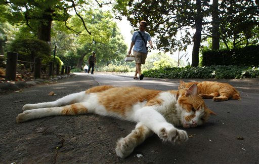 Cats take a nap in a park in Tokyo in the early afternoon Tuesday, Aug. 16, 2011. &#40;AP Photo&#47;Shizuo Kambayashi&#41; <span class=meta>(AP Photo&#47; Shizuo Kambayashi)</span>