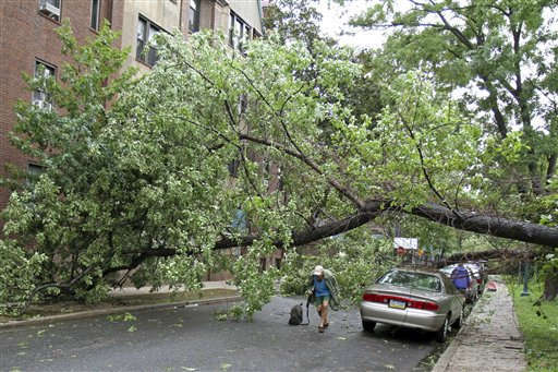 A man walking his dog, ducks under a downed tree that was felled by strong winds of Tropical Storm Irene while walking his dog, Sunday Aug. 28, 2011 in the Forest Hills section of the Queens borough of New York. Tropical Storm Irene unleashed furious wind and rain on New York on Sunday and sent seawater surging into the Manhattan streets. But the city appeared to escape the worst fears of urban disaster _ vast power outages, hurricane-shattered skyscraper windows and severe flooding. &#40;AP Photo&#47;Gregory Payan&#41; <span class=meta>(AP Photo&#47; Gregory Payan)</span>