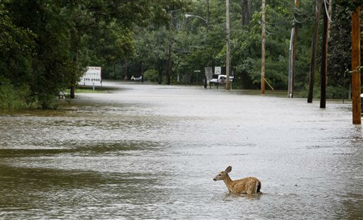 A deer is seen in floodwaters in the aftermath of Hurricane Irene, Sunday, Aug. 28, 2011, Lincoln Park, N.J. Rivers and creeks surged toward potentially record levels late Sunday as Irene, just the third hurricane to come ashore in New Jersey in the past 200 years, charged to the north and left behind a mess and a sense that the state got off relatively easy. &#40;AP Photo&#47;Julio Cortez&#41; <span class=meta>(AP Photo&#47; Julio Cortez)</span>