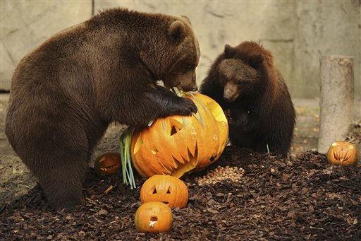 """<div class=""""meta image-caption""""><div class=""""origin-logo origin-image """"><span></span></div><span class=""""caption-text"""">Hamburg/ Die Kamtschatkabaerin (Ursus arctos beringianus) Mascha und ihr Welpe Wanja naschen am Freitag (28.10.11) in ihrem Gehege in Hagenbecks Tierpark von einem Halloween-Kuerbis. Mit Baerenhunger und scharfen Krallen fielen Baerin Mascha und ihre zwei zehn Monate alten Welpen Wanja und Misho ueber die von einem Gaertner aus der Region gestifteten Kuerbisse her. Foto: Philipp Guelland/dapd (Photo/Philipp Guelland)</span></div>"""