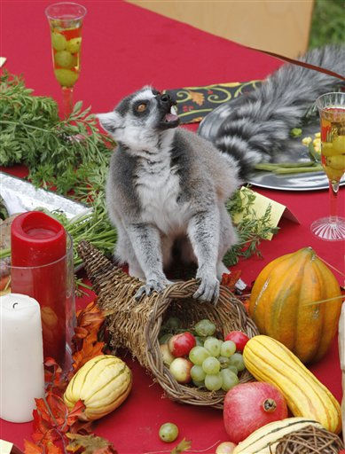 "<div class=""meta image-caption""><div class=""origin-logo origin-image ""><span></span></div><span class=""caption-text"">In this photo released by the San Francisco Zoo, a ring-tailed lemur enjoys a Thanksgiving feast at the San Francisco Zoo, Wednesday, Nov. 23, 2011, in San Francisco. The feast consisted of green beans, a fruit salad of apples, bananas, and grapes, sweet potatoes, a turkey made out of monkey chow and apple juice with grapes in champagne flutes. (AP Photo/ San Francisco Zoo, George Nikitin) (AP Photo/ George Nikitin)</span></div>"