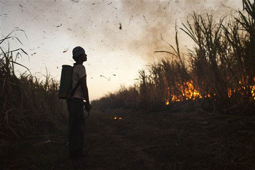 In this picture taken on Friday Nov. 25, 2011, a worker watches the controlled burning of a sugar cane field before cutting it near Retalhuleu, Guatemala.  Sugar is Guatemala&#39;s most important agricultural export, making Guatemala the fifth largest sugar exporter in the world. The industry employs around 350,000 people, with people migrating from all parts of Guatemala, during the harvest season from October to March.  Sugar cane workers earn around 60 quetzales per day, around &#36;8 US dollars. &#40;AP Photo&#47;Rodrigo Abd&#41; <span class=meta>(AP Photo&#47; Rodrigo Abd)</span>