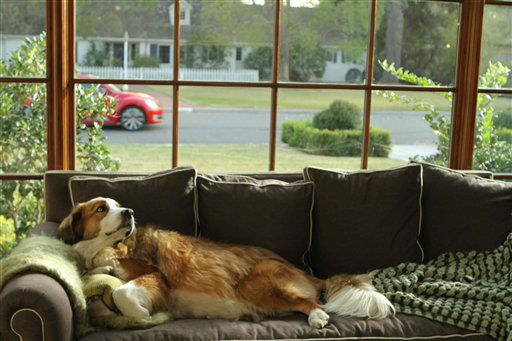 This video grab provided by Volkswagen of America Inc., shows Bolt the dog on the couch, watching the all new Volkswagen Beetle go by. The spot will air during Super Bowl XLV1, Sunday, Feb. 5, 2012. &#40;AP photo&#47;Volkswagen of America Inc.&#41; <span class=meta>(AP Photo&#47; Anonymous)</span>