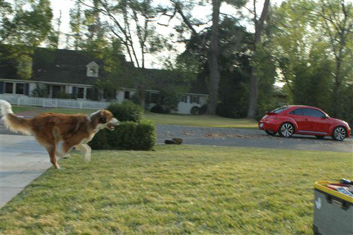 This video grab provided by Volkswagen of America Inc., shows Bolt the dog chasing the new Volkswagen Beetle. The ad will air during the Super Bowl, Sunday, Feb. 5, 2012. &#40;AP Photo&#47;Volkswagen of America Inc.&#41; <span class=meta>(AP Photo&#47; Anonymous)</span>