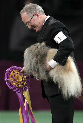 David Fitzpatrick holds a ribbon after Malachy, a Pekingese, was awarded best in show at the 136th annual Westminster Kennel Club dog show in New York, Tuesday, Feb. 14, 2012.  &#40;AP Photo&#47;Seth Wenig&#41; <span class=meta>(AP Photo&#47; Seth Wenig)</span>