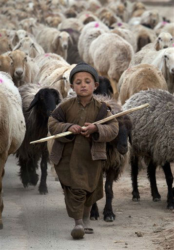 A young Pakistani shepherd escorts his herd in suburbs of Islamabad, Pakistan, Monday, March 12, 2012. &#40;AP Photo&#47;B.K. Bangash&#41; <span class=meta>(AP Photo&#47; B.K. Bangash)</span>