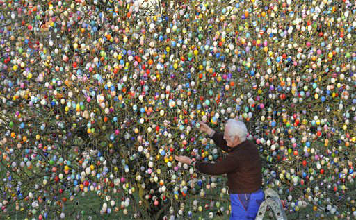 Volker Kraft decorates a tree with 10,000 Easter eggs in the garden of the retired couple Christa and Volker Kraft in Saalfeld, Germany, Wednesday, March 21, 2012. The Kraft family has been decorating their tree for Easter for more than forty years. &#40;AP Photo&#47;Jens Meyer&#41; <span class=meta>(AP Photo&#47; Jens Meyer)</span>