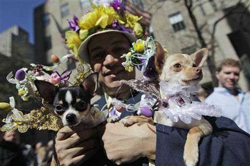 Anthony Rubio brought his 8 month old Chihuahuas Bogie, left, and Kimba to the Easter Parade on Fifth Ave.,  Sunday, April 8, 2012 in New York.  &#40;AP Photo&#47;Mary Altaffer&#41; <span class=meta>(AP Photo&#47; Mary Altaffer)</span>