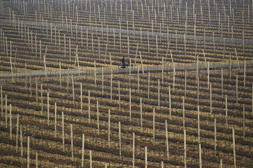 A North Korean man rides a bicycle on the grounds of a communal apple farm on the outskirts of Pyongyang, North Korea on Tuesday, April 10, 2012. &#40;AP Photo&#47;David Guttenfelder&#41; <span class=meta>(AP Photo&#47; David Guttenfelder)</span>