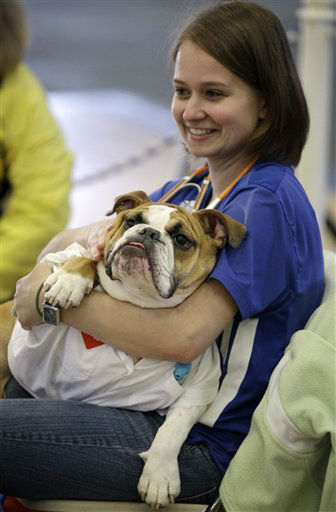 "<div class=""meta ""><span class=""caption-text "">Elizabeth Ahrens, of La Vista, Neb., holds her dog Scruffy during the 33rd annual Drake Relays Beautiful Bulldog Contest Monday, April 23, 2012, in Des Moines, Iowa. The pageant kicks off the Drake Relays festivities at Drake University where a bulldog is the mascot. (AP Photo/Charlie Neibergall) (AP Photo/ Charlie Neibergall)</span></div>"