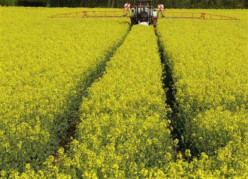 "<div class=""meta ""><span class=""caption-text "">A farmer fertilizes rapeseed plants at a field in Rheinberg, Germany, on Wednesday, April 25, 2012. After rainy periods and a predicted warm and sunny weekend, the plants get perfect conditions to grow quickly. (AP Photo/Frank Augstein) (AP Photo/ Frank Augstein)</span></div>"