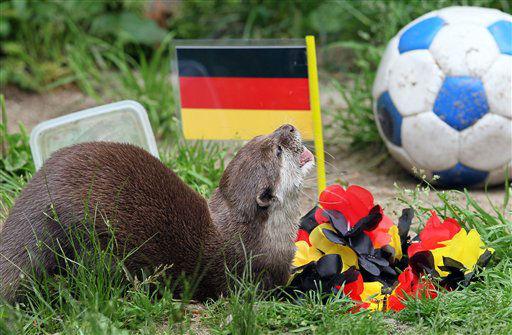 """<div class=""""meta image-caption""""><div class=""""origin-logo origin-image """"><span></span></div><span class=""""caption-text"""">Zwergotter Ferret frisst am Donnerstag (21.06.12) im Tiergarten in Aue aus einem Futternapf vor einem Deutschlandfaehnchen. Den Zwergottern Ferret und Moermel wurden zwei gleiche Futtermoeglichkeiten aus Fisch und Ei angeboten die den Laendern Deutschland und Griechenland zugeordnet wurden, beide Otter frassen zuerst aus der Futterschale unter der Deutschen Fahne. Die Leitung des Zoos deutet die Futterwahl der Tiere als Vorhersage eines Siegs Deutschlands ueber Griechenland am Freitag (22.06.12) im Viertelfinale der Fussball-Europameisterschaft. Foto: Uwe Meinhold/dapd</span></div>"""