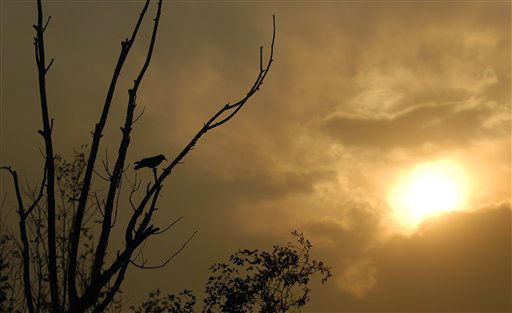 A raven sits in a barren tree as the sun sets near a wildfire west of Colorado Springs, Colo. on Sunday, June 24, 2012. The fire erupted Saturday and grew out of control to more than 3 square miles early Sunday, prompting the evacuation of more than 11,000 residents and an unknown number of tourists. &#40;AP Photo&#47;Bryan Oller&#41; <span class=meta>(AP Photo&#47; Bryan Oller)</span>