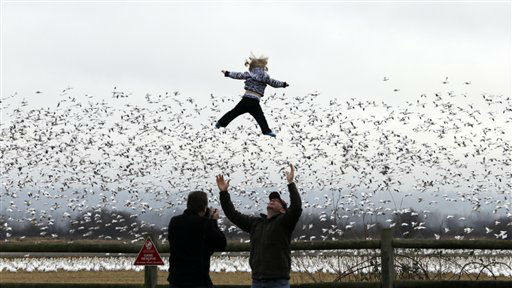 Cody Mooney, visiting from Loveland, Colo., tosses his 17-month-old daughter Willow in the air as snow geese take flight behind, Thursday, Dec. 27, 2012, in the Skagit Valley near La Conner, Wash. Bird watchers took advantage of a day without rain Thursday to gaze at some of the tens of thousands of snow geese that spend the winter near the mouth of the Skagit River there. The geese migrate from their mating grounds in Alaska and Siberia in late November to spend the winter in wetlands and farm fields of the Skagit Valley and other areas of northwest Washington. &#40;AP Photo&#47;Elaine Thompson&#41; <span class=meta>(AP Photo&#47; Elaine Thompson)</span>