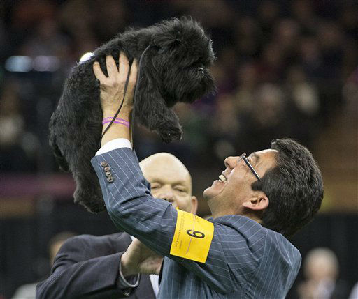 "<div class=""meta image-caption""><div class=""origin-logo origin-image ""><span></span></div><span class=""caption-text"">Ernesto Lara celebrates with Banana Joe, an affenpinscher, who won Best in Show, during the 137th Westminster Kennel Club dog show, Tuesday, Feb. 12, 2013, at Madison Square Garden in New York. (AP Photo/Frank Franklin II) (AP Photo/ Frank Franklin II)</span></div>"