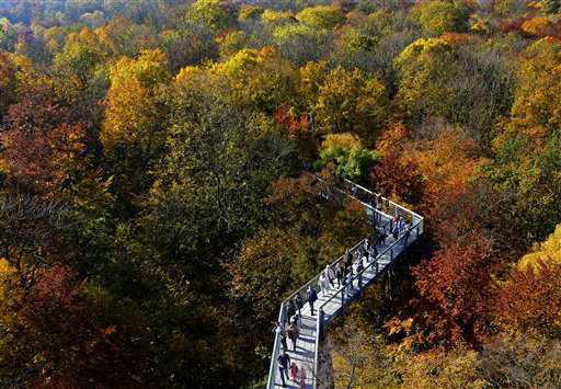 Visitors walk between trees bearing their autumnal colors during sunny weather at the &#34;Baumkronenpfad&#34; &#40;treetop path&#41; in the Hainich National Park near Bad Langensalza, central Germany, Sunday, Oct. 21, 2012. The treetop path is the only one of its kind in continental Europe and is a trail through the trees running at about 30 meters &#40;98 feet&#41; above ground. &#40;AP Photo&#47;Jens Meyer&#41; <span class=meta>(AP Photo&#47; Jens Meyer)</span>