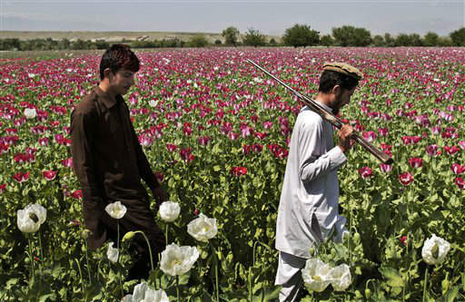 Afghan men walk through a poppy field in Khogyani district of Jalalabad east of Kabul, Afghanistan, Thursday, April 11, 2013. When foreign troops arrived in Afghanistan in 2001, one of their goals was to stem drug production. Instead, they have concentrated on fighting insurgents, and have often been accused of turning a blind eye to the poppy fields. &#40;AP Photo&#47;Rahmat Gul&#41; <span class=meta>(AP Photo&#47; Rahmat Gul)</span>