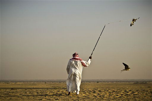 In this Tuesday Nov. 13, 2012 photo, Iraqi professional falcon trainer Abu Badr al-Anazi swings a pigeon body to attract a falcon during a training session on the outskirts of Dubai, United Arab Emirates. While the methods to develop top-quality hunting falcons date back to antiquity, its transition into a modern Middle Eastern passion has brought in microchip tagging and price tags that can run well over &#36;10,000 for a prime bird.&#40;AP Photo&#47;Kamran Jebreili&#41; <span class=meta>(AP Photo&#47; Kamran Jebreili)</span>