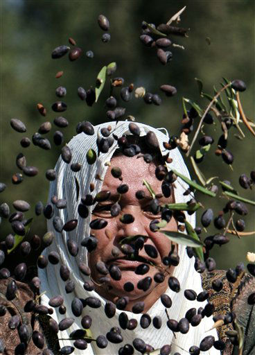 A Palestinian woman sorts olives during the olive harvest in the West Bank village of Kabatyeh, near Jenin, Monday, Oct. 8, 2012. Palestinians began to harvest olives in October, a staple for many local farmers that also use them to make oil. &#40;AP Photo&#47;Mohammed Ballas&#41; <span class=meta>(AP Photo&#47; Mohammed Ballas)</span>