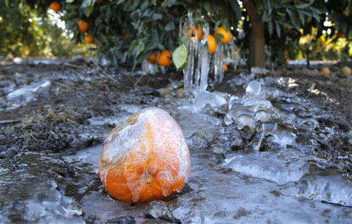 "<div class=""meta ""><span class=""caption-text "">Ice covers an orange at an orange grove in Redlands, Calif., Tuesday, Jan. 15, 2013. A cold snap that has California farmers struggling to protect a $1.5 billion citrus crop has slowly started to ease, though frigid temperatures were still the norm Tuesday morning throughout the state and across other parts of the West. (AP Photo/Jae C. Hong) (AP Photo/ Jae C. Hong)</span></div>"