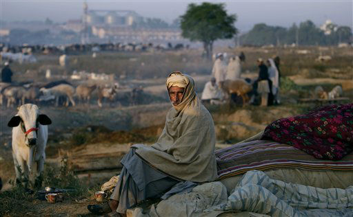 Pakistani livestock merchant, Ghulam Hassan, 60, waits for customers at a roadside livestock market as Muslims prepare for the upcoming holiday of Eid al-Adha, or &#34;Feast of Sacrifice,&#34; on the outskirts of Islamabad, Pakistan, Monday, Oct. 22, 2012. &#40;AP Photo&#47;Muhammed Muheisen&#41; <span class=meta>(AP Photo&#47; Muhammed Muheisen)</span>