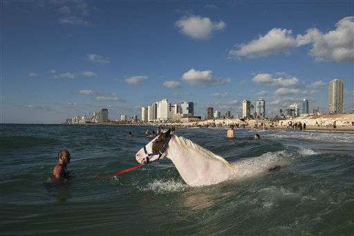 An Israeli Arab man swims with a horse  in the Mediterranean Sea off the beach in Tel Aviv, Israel , the third day of Eid al-Fitr, Tuesday, Aug. 21, 2012. Eid al-Fitr. One of the most important holidays in the Muslim world, Eid al-Fitr is marked with prayers, family reunions and other festivities. &#40;AP Photo&#47;Oded Balilty&#41; <span class=meta>(AP Photo&#47; Oded Balilty)</span>