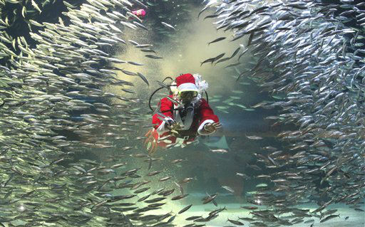 Dressed in a Santa Claus outfit, a diver feeds to sardines at the Coex Aquarium in Seoul, South Korea, Tuesday, Dec. 11, 2012. Christmas is one of the biggest holidays in South Korea, where over half of the population are Christians. &#40;AP Photo&#47;Ahn Young-joon&#41; <span class=meta>(AP Photo&#47; Ahn Young-joon)</span>