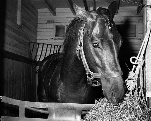 FILE - In this June 8, 1958, file photo, Tim Tam eats hay in a stall the day after the Belmont Stakes horse race at Belmont Park in Elmont, N.Y. The Calumet Farm bay colt finished second to Cavan by 5 1&#47;2 lengths after running the final quarter-mile with a broken bone in his right front ankle. As I&#39;ll Have Another prepares to attempt to win the Belmont Stakes in his quest to become the 12th Triple Crown champion and first in 34 years on Saturday, June 9, 2012, The Associated Press takes a look at some of the 19 horses who won the Kentucky Derby and the Preakness, but came up short in the final leg of the Triple Crown, and how the race unfolded. &#40;AP Photo&#47;Jacob Harris, File&#41; <span class=meta>(AP Photo&#47; Jacob Harris)</span>