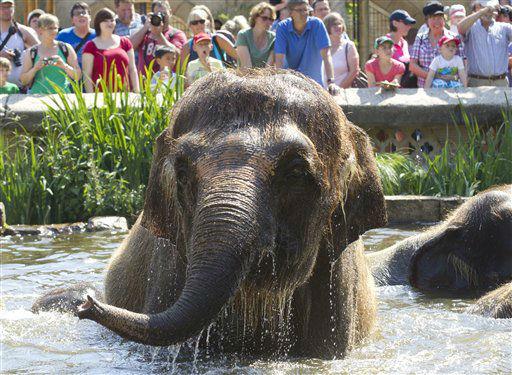 """<div class=""""meta image-caption""""><div class=""""origin-logo origin-image """"><span></span></div><span class=""""caption-text"""">Ein weiblicher Elefant (Elephantidae) badet am Mittwoch (25.07.12) im Zoo in Hannover, waehrend im Hintergrund Besucher zu sehen sind. Hoch Xerxes sorgt auch in den kommenden Tagen fuer schwuelheisses Sommerwetter. Die Temperaturen klettern vielerorts wieder ueber die 30-Grad-Marke, wie der Deutsche Wetterdienst (DWD) am Mittwoch mitteilte. (zu dapd-Text) Foto: Joerg Sarbach/dapd (Photo/Joerg Sarbach)</span></div>"""