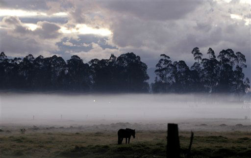 A horse grazes in a pasture in early morning fog caused by frost-producing overnight temperatures in Chia, on the outskirts of Bogota, Colombia, Wednesday, Jan. 9, 2013. In Colombia&#39;s highlands, crops are prone to freeze damage in the first few months of the year when temperatures are high during the day but drop below zero at night. &#40;AP Photo&#47;Fernando Vergara&#41; <span class=meta>(AP Photo&#47; Fernando Vergara)</span>