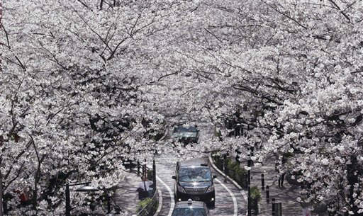 "<div class=""meta image-caption""><div class=""origin-logo origin-image ""><span></span></div><span class=""caption-text"">Cars go through a tunnel of blooming cherry blossoms in Tokyo Friday, March 22, 2013. (AP Photo/Koji Sasahara) (AP Photo/ Koji Sasahara)</span></div>"