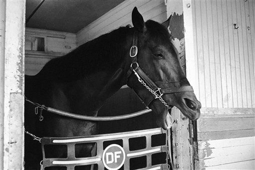 FILE - In this Sept. 13, 1962, file photo, Carry Back yawns in his stall at Belmont Park in Elmont, N.Y. When jockey Johnny Sellers asked the horse for more on what should have been a thrilling stretch run to victory, the horse &#34;spit the bit&#34; _ a racing term meaning he simply didn&#39;t feel like running anymore, resulting in a seventh-place finish behind 65-1 long shot Sherluck. As I&#39;ll Have Another prepares to attempt to win the Belmont Stakes in his quest to become the 12th Triple Crown champion and first in 34 years on Saturday, June 9, 2012, The Associated Press takes a look at some of the 19 horses who won the Kentucky Derby and the Preakness, but came up short in the final leg of the Triple Crown, and how the race unfolded. &#40;AP Photo, File&#41; <span class=meta>(AP Photo&#47; Harry Harris)</span>