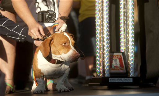 Walle, 4-year-old mix of beagle, boxer and basset hound, celebrates after winning top honors in the 25th annual World&#39;s Ugliest Dog Contest at the Sonoma-Marin Fair on Friday, June 21, 2013, in Petaluma, Calif. &#40;AP Photo&#47;Noah Berger&#41; <span class=meta>(AP Photo&#47; Noah Berger)</span>
