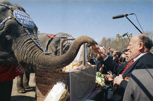 New York City Mayor Edward I. Koch feeds a bagel to an elephant from the Ringling Brothers and Barnum and Bailey Circus during a lunchtime picnic on Tuesday, April 12, 1988 in New York&#39;s Central Park.   The 19 elephants, along with a contingent of clowns, jugglers and showgirls, strolled from Madison Square Garden to the park and back again, for the outing. &#40;AP Photo&#47;Mario Cabrera&#41; <span class=meta>(AP Photo&#47; Mario Cabrera)</span>