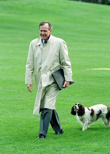 U.S. President George Bush is followed by his dog Millie across the South Lawn of the White House in Washington, D.C., Sunday afternoon, Dec. 6, 1992.  The president returns from a weekend at Camp David.  &#40;AP Photo&#47;Doug Mills&#41; <span class=meta>(AP Photo&#47; DOUG MILLS)</span>