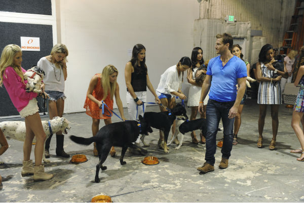 "<div class=""meta image-caption""><div class=""origin-logo origin-image ""><span></span></div><span class=""caption-text"">THE BACHELOR - ""Episode 1802"" - Thirteen women meet up with the handsome single dad for a photo shoot benefitting Best Friends Animal Society, an organization that focuses on the plight of animals in need. Each bachelorette is assigned a dog and takes a photo with the pup and Juan Pablo. However, when several revealing costumes are unveiled, two women go into an emotional tailspin and have second thoughts about whether they should continue with the shoot. Lucy rushes to the aid of one of her struggling counterparts by offering to go ""au natural."" But at that evening's after party, one woman steals the spotlight when she has a meltdown over not getting one-on-one time with Juan Pablo and derails the night. Will Juan Pablo forgive this bachelorette and chalk up the outburst to nerves or will this be the end of the line for her? - on ""The Bachelor,"" MONDAY, JANUARY 13 (8:00-10:01 p.m., ET), on the ABC Television Network. (ABC/Todd Wawrychuk) CHRISTY, NIKKI, ELISE, ALLI, ANDI, VICTORIA, JUAN PABLO GALAVIS, CASSANDRA, CHANTEL (Photo/Todd Wawrychuk)</span></div>"