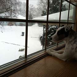 This dog looks on as the snow continues to fall