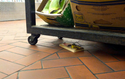 Rats were captured on camera running around inside the Fairway Supermarket on the Upper West Side.  From http:&#47;&#47;myupperwest.com. <span class=meta>(http:&#47;&#47;myupperwest.com)</span>
