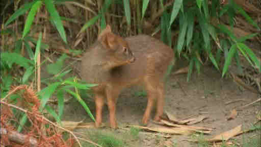 Wildlife officials say a member of the world's smallest deer species has been born at a New York City zoo. The doe weighed 1 pound when it was born last month at the Queens Zoo.