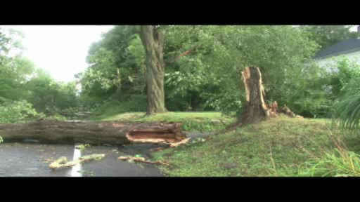 Dozens of trees were knocked down in Lake Carmel, New York after evening of heavy rain and flooding across the Tri-State Area.  <span class=meta>(WABC Photo)</span>
