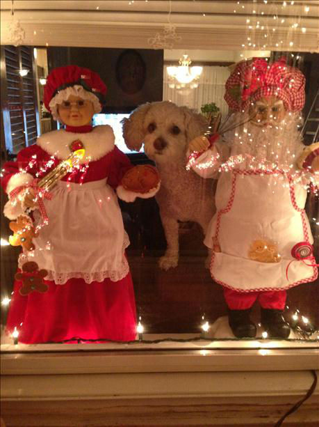Levi likes sitting at the window with Mr. &amp; Mrs. Clause. <span class=meta>(WABC Photo)</span>