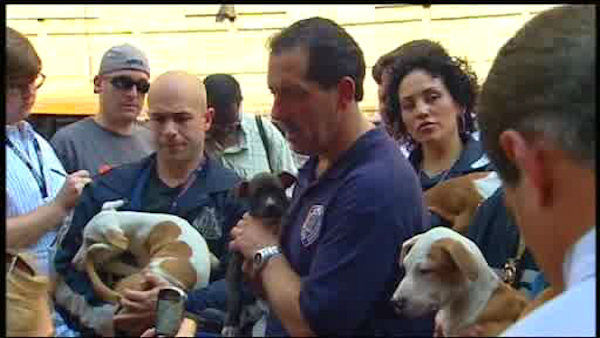 At least one person was arrested in an alleged dogfighting ring in the Bronx.  Dozens of dogs were rescued.