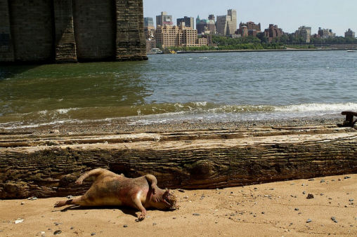 Could it be the Montauk Monster?  A large animal has washed up in Manhattan off of the East River shore. <span class=meta>(Photo&#47;Denise Ginley)</span>